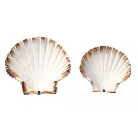 COQUILLE ST JACQUES NATURE 12-13 CM /250