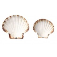 COQUILLE ST JACQUES NATURELLE 10/12 /300
